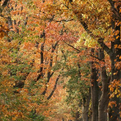 Natuur- en bos
