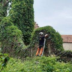 Kerkruïne in Hulshout krijgt snoeibeurt