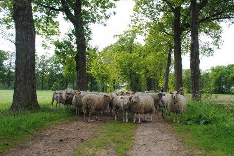 Gretige grazers weer in de Kolonies