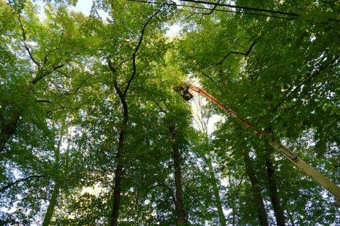 Hofdreef van Hof Ter Laken in Heist-op-den-Berg kreeg nodige snoeibeurt