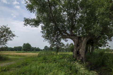 Kempens Landschap legt laatste puzzelstuk van landschapspark Frijthout Hove